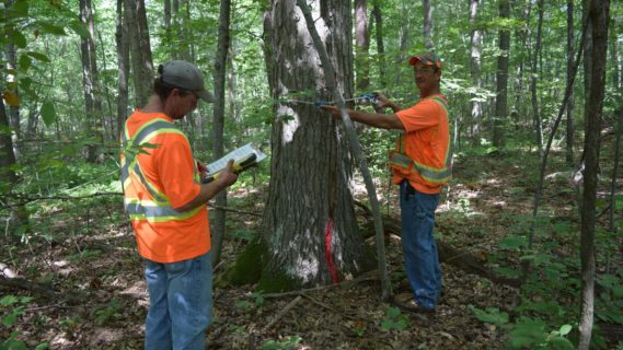 2 men in construction uniforms inspecting a tree.