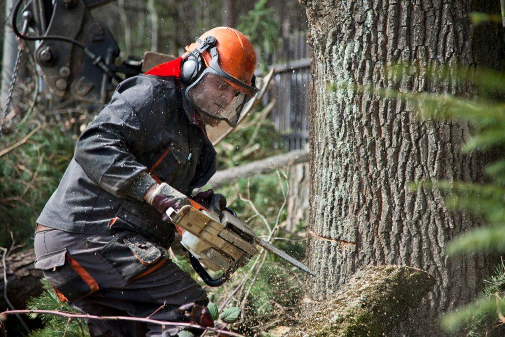 Forestry Log Procurement