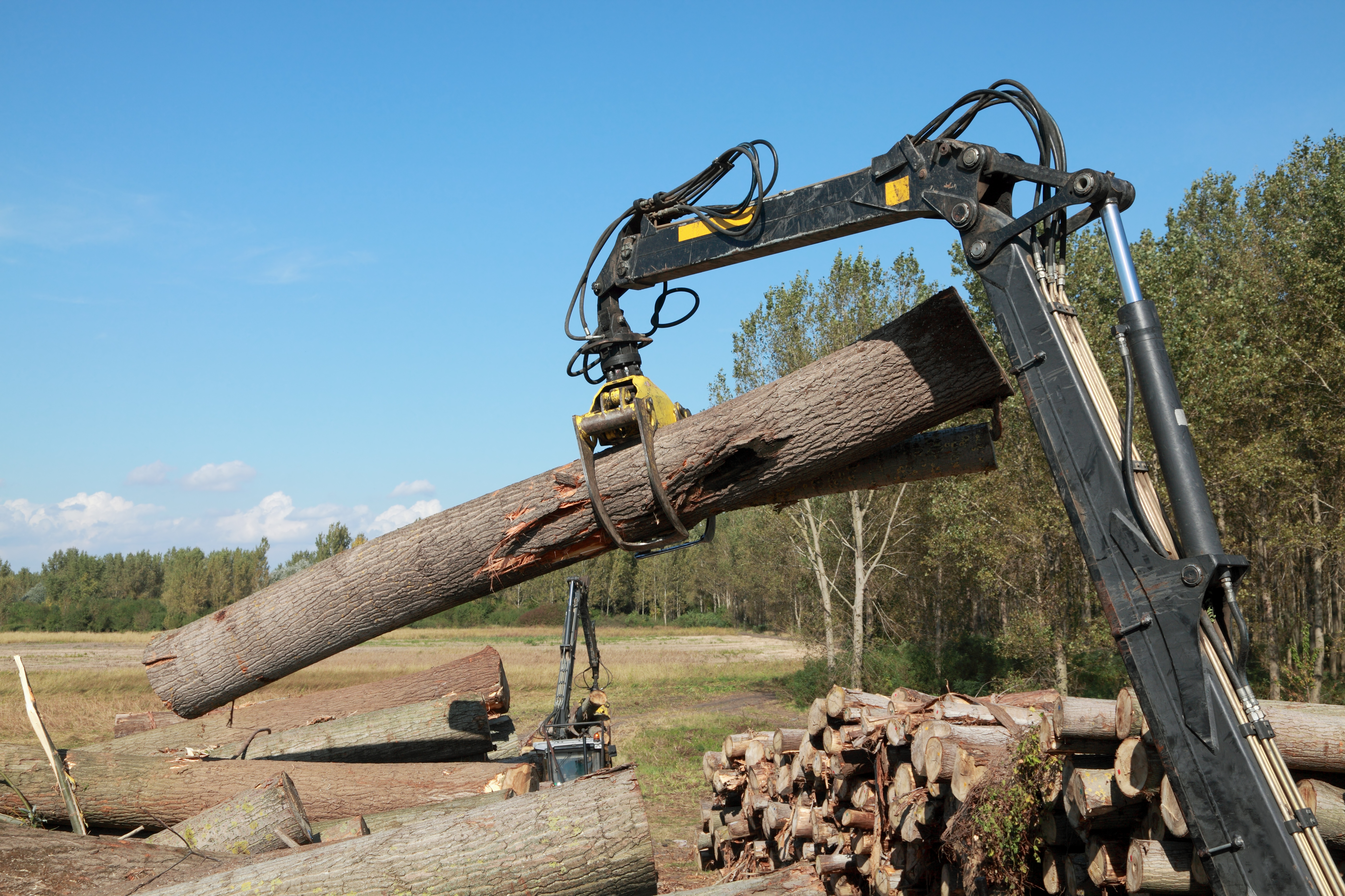 Crane with jaws loading logs onto a stack